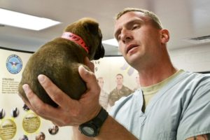four Easy Duties That May Save You 1000's At The Vet
