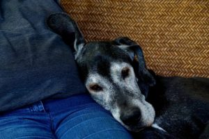 How To Put together Your House For A Senior Canine