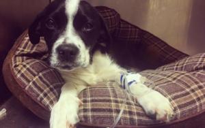 Shelter Employee Dedicates Her Life To Saving Lots of Of Parvo Puppies