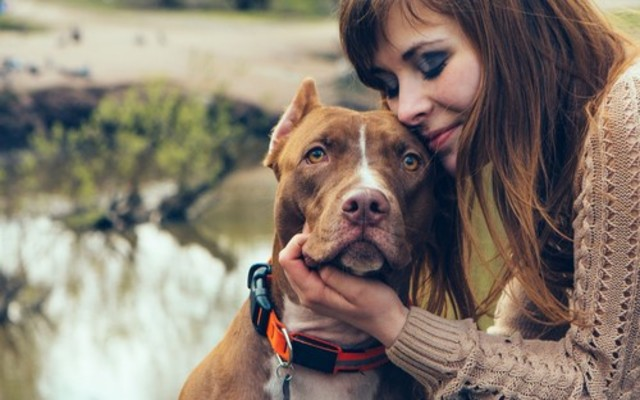Delta Airlines Bans Pit Bull Service & Support Dogs From All Flights