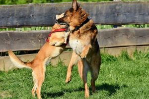 "9 Causes Why Male & Feminine Canines Hump, Even If They've Been ""Mounted"""