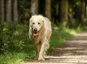 eight Adjustments To Anticipate As Your Canine Turns into A Senior