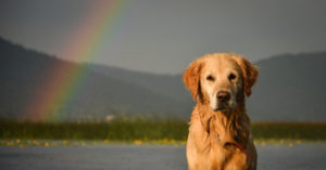 Why The Loss of life of a Pet Can Be Even Extra Painful Than The Loss of life Of A Relative