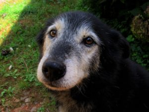 How To Get The Most From Your Senior Canine's Vet Appointment