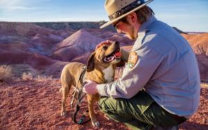 New B.A.R.Okay. Ranger Program Permits Canine To Discover Nationwide Parks