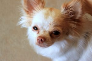 What Causes Separation Anxiousness In Canine?