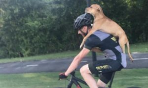 Sort-Hearted Bicycle owner Pedals Injured Stray Pet To Security