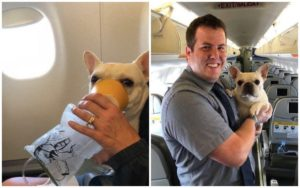 JetBlue Flight Attendants Save The Life Of A Canine In Misery On Their Flight