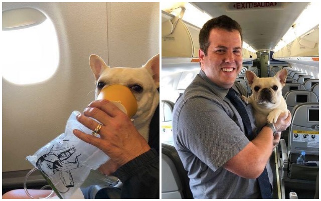 JetBlue Flight Attendants Save The Life Of A Dog In Distress On Their Flight
