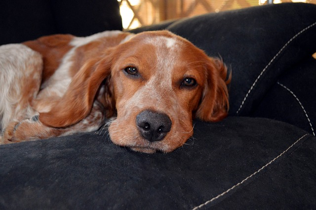 Pet Sitting Or A Boarding Kennel: Which Is Better For Your Dog?