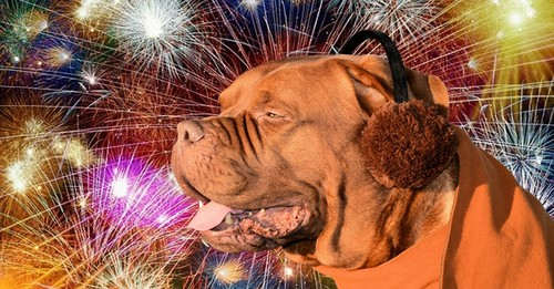 Why CBD Oil Might Be Your Dog's Best Friend During Fireworks