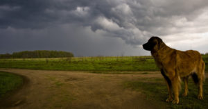 Why CBD Oil May Be Your Canine's Greatest Pal Throughout a Thunderstorm