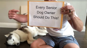 Making Recollections: Each Senior Canine Proprietor Ought to Do This!