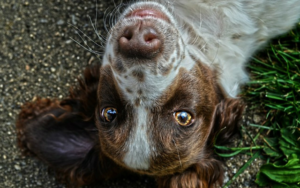 What You Want To Know About Making Eye Contact With Your Canine