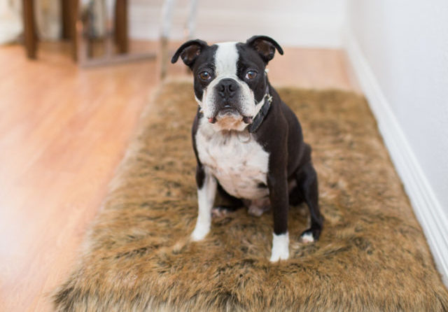 10 Simple Ways To Keep Your House From Smelling Like A Kennel