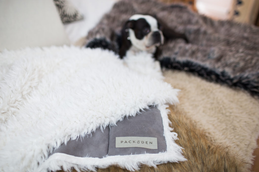 This Company Just Invented Another Reason You Should Allow Your Dog On The Couch