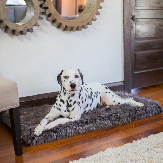 geriatric dog bed