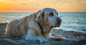 four Unforgettable Methods To Honor The Lifetime of a Canine Who Handed Away