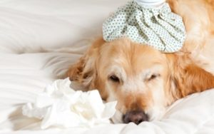 9 Causes Your Canine Might Be Vomiting