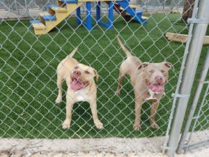 Rescue Rebuild Helped This Shelter Play Space Change into Parvo-Free