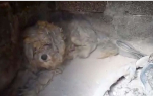 Stray Canine Made Well-known By Greek Wildfires Finds His Eternally House