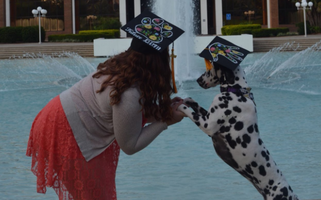 Service Dog Gets Her Own Graduation Cap For Helping Her Master Succeed - iHeartDogs.com