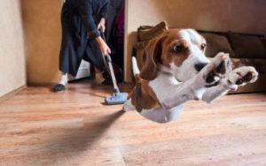 dog afraid of vacuum