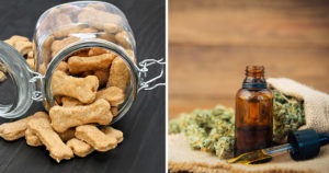 CBD Oil Tinctures vs. CBD Treats for Canine: Which Is Higher?