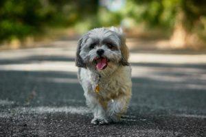 High 10 Canine Friendliest Cities of 2018
