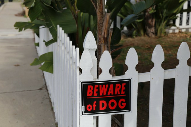 overprotective dog
