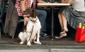 How To Assist Maintain Your Canine Calm In Public