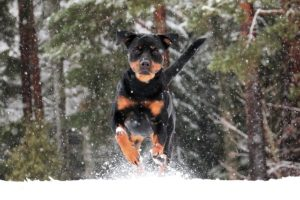 10 Easy Methods To Tire Out Your Lively Canine