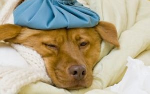 Michigan Is Experiencing A Drastic Rise In Canine Flu Circumstances