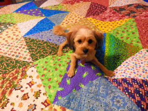 Girl Creates Beautiful Memorial Quilt Utilizing Her Dearly Departed Canine' Scarves
