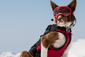 Superpower Canine Showcases The Hardest Working Canines With Uplifting Documentary