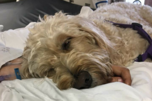 Teenager Wakes From Coma After Go to From A Remedy Canine
