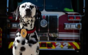 "Georgia Firefighter Remembers Late Canine Who Modified His Life, ""She Was Every little thing To Me"""