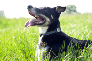 Enhance Your Canine's Well being And Get To Know Him Higher Than Ever With Animo!