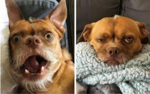 Saved From Loss of life Row, This Pup Wears His Feelings All Over His Face