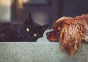 Home Passes Official Canine & Cat Meat Commerce Prohibition Act