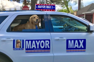 Golden Retriever Serves As Mayor In Small City, And Even Has Canine Deputies!