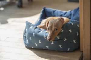 dog pees the bed