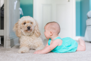 introduce a dog to baby