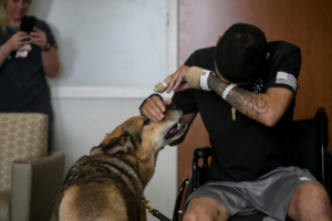 Wounded Soldier And Army Canine Reunite After Receiving Purple Hearts