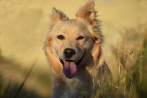 probiotics can help dogs