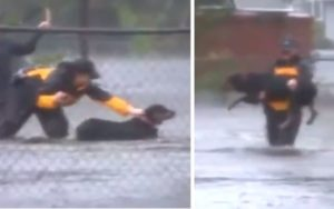 Reporter Interrupts Reside Newscast To Assist Rescue Canine From Hurricane Flood Waters