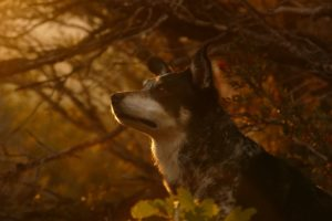 Vets Urge Consciousness As Seasonal Canine Illness Reaches Peak Season In UK