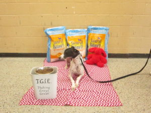 You Helped Save Over 600 Greyhounds With Rescue Financial institution
