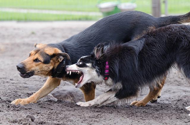 teach your dog