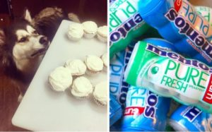 Grieving Household Warns The Public After Canine Dies From Consuming Chewing Gum